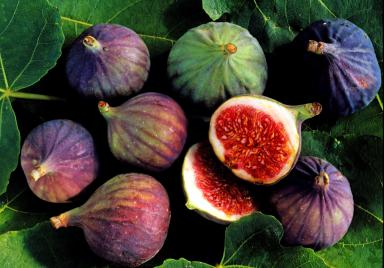figs_getty2400