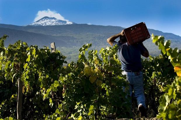 Etna-vin