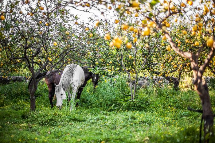 cavalli-giardini-naxos